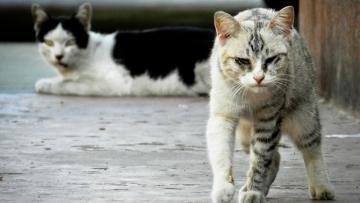 На уборку погибших животных с улиц Петербурга потратят ...