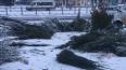 Петербуржцев просят относить новогодние елки в специальные ...