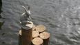 Неизвестный водолаз похитил монеты зайчика у Петропавлов ...