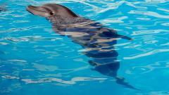 Жители дома на Бутлерова не согласны с решением построить дельфинарий у них на улице