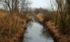 В Ленобласти при чистке канавы нашли останки человека