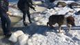 В Петергофе 13-летний мальчик спас тонущую собаку