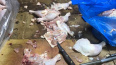 На Коломяжском нашли подпольный цех, где разделывали ...