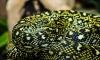 Полуторагодовалый мальчик из Бразилии загрыз напавшую на него ядовитую змею