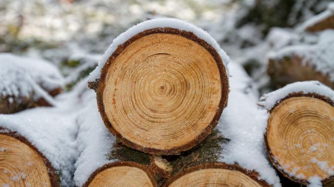 Эксперт прокомментировал запрет на вывоз из России необработанной древесины