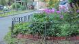 Смольный выделил на садоводства более 500 млн рублей