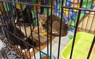 Спасатели вызволили двух кошек из заброшенной квартиры на бульваре Новаторов