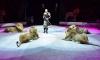 Египетский дрессировщик из цирка в Автово попался ФМС с просроченной визой