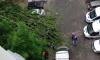 На Большеохтинском сильный ветер обрушил дерево на машину с людьми