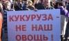 Смольный согласовал митинг петербургских оппозиционеров