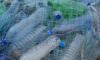 В Кронштадте активисты очистят берега акватории Балтийского моря от мусора