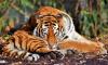 В национальном парке в Приморье нашли труп амурского тигра