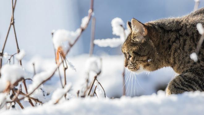 В воскресенье в Ленобласти будет морозно и снежно