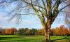 Губернатор Ленобласти: парк Оккервиль застраивать не будут