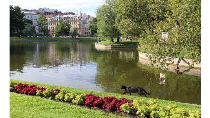 В Петербурге определили лучшие скверы и парки