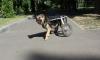 Под Тулой хулиганы отняли инвалидную коляску у больной собаки, чтобы сдать ее в скупку железа
