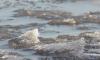 Пьяный петербуржец в Колпине провалился под лед Ижоры
