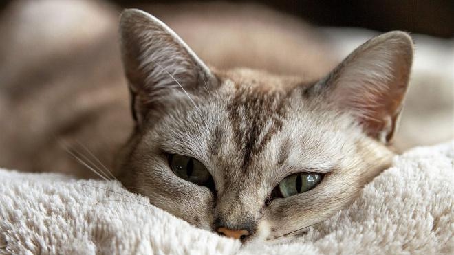 Специалисты назвали количество проживающих в Петербурге кошек и собак