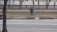 Во Фрунзенском районе прорвало две трубы с холодной ...