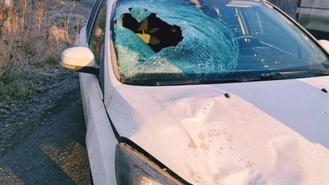 На трассе в Ломоносовском районе пешеход получил перелом позвоночника и ушиб сердца