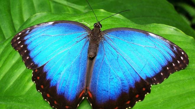 ВПулково в мае досмотрели семь миллионов икринок и полторы тысячи бабочек