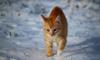 Температура в Ленобласти опустится до -14 градусов
