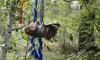 В Омске неизвестные приносят в жертву кошек и ондатр