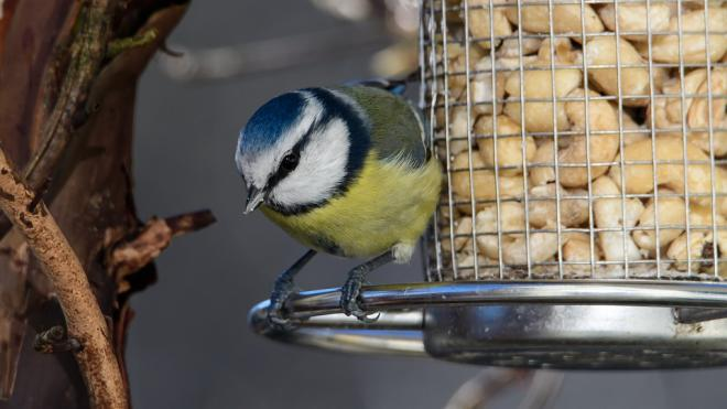 Орнитолог рассказал петербуржцам, каких птиц можно привлечь к своему окну кормушкой