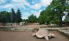 Петербуржцы выберут нового обитателя Южно-Приморского парка