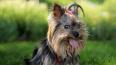 В Петербурге появятся площадки для выгула собак