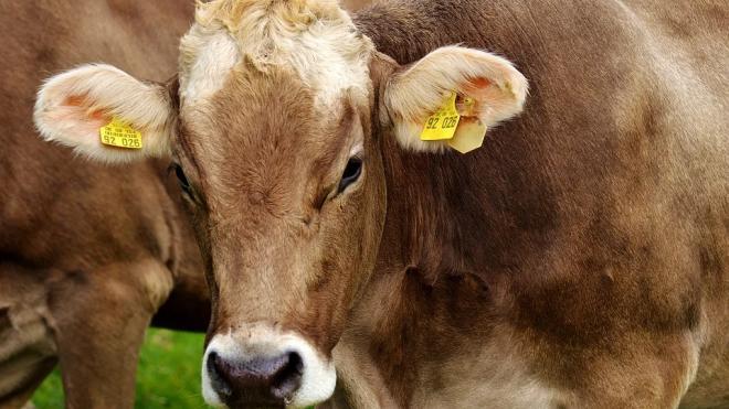 Производство молока в России подорожало на 18% в марте