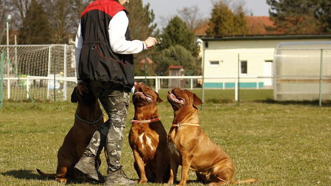 Подземка Петербурга наймет кинологов с собаками для выявления взрывчатых веществ