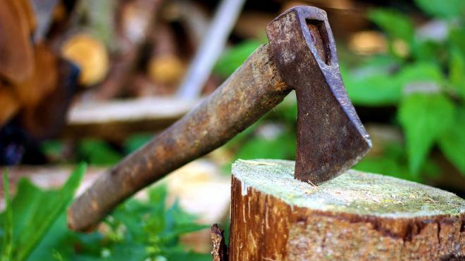 За вырубку деревьев в Репино мужчина может заплатить 300 тысяч рублей