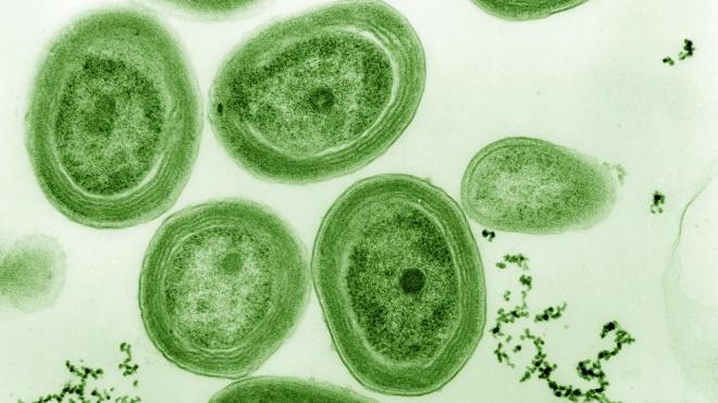 Ученые из петербургского ЛЭТИ разработали источник энергии на основе водорослей