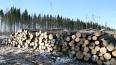 В Сясьстрое горит  лесоперерабатывающий завод