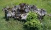 В Приозерском районе выбросили сотни саженцев ели