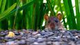 Расплодившиеся в парке Сосновка крысы атаковали местных...
