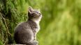 """Выставка кошек """"В Гостях у САФФИ"""""""