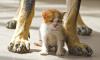 Жителей Петербурга просят временно приютить кошек и собак