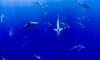 Ученые из США обнаружили первых в мире акул-вегетарианцев