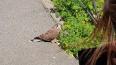 Жительница Петербурга нашла в городе сову со сломанным ...