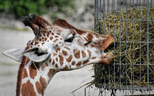 Ленинградский зоопаркперестал бесплатно пускатьмногодетные семьи