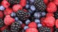 Лужанам запретили собирать ягоды у полигона