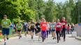 """Организаторы """"Зеленого марафона"""" проведут бесплатную ..."""