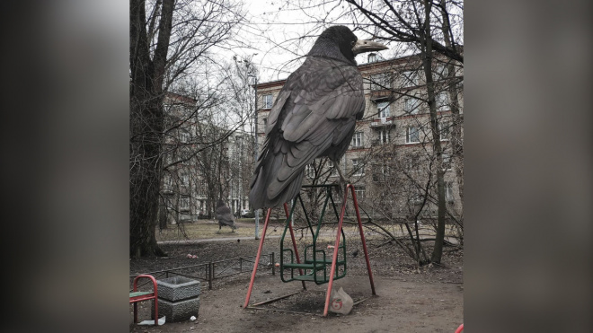 """В Петербург """"прилетели"""" гигантские мега-грачи"""