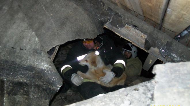 В Апатитах спасли собак из заброшенного гаража
