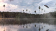 В Петербурге заметили гигантскую грави-каракатицу