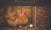 Ленинградская область расширяет производство продукции птицеводства