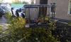 Упавшая ветка тополя убила девушку в наушниках в Новосибирске
