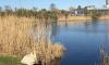 Петербуржец выбросил домашних гусей у озера Долгое: животные погибают